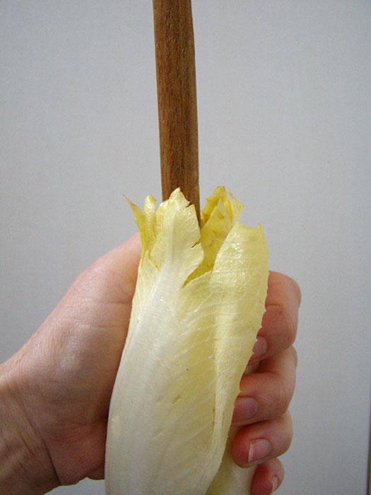 Chicoree aushöhlen