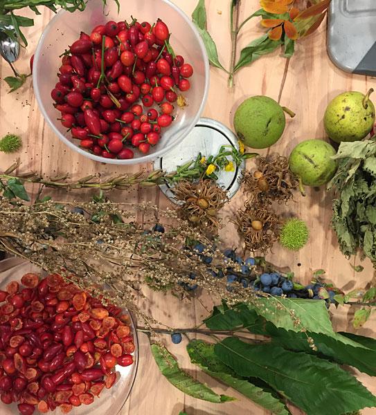 FoodBloggerCamp Berlin 2015 Session zum Thema essbare Wildpflanzen