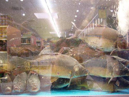 traurige Fische