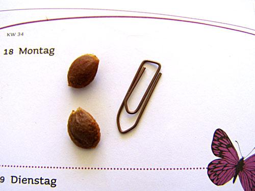 Kirschpflaumenkerne